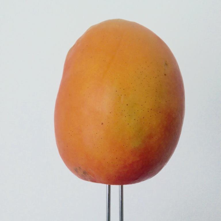 Choose a ripe yet firm mango. Trim stem end and insert a sturdy skewer, sharpened dowel, or similar.