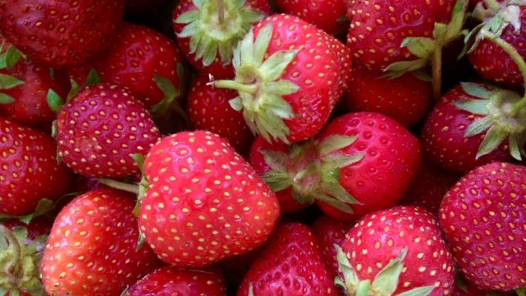 Freshly picked Jewel strawberries from Hand Melon Farm, Greenwich, New York.