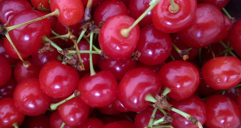 Sour cherries from Malta Ridge Orchard in Saratoga County, New York.
