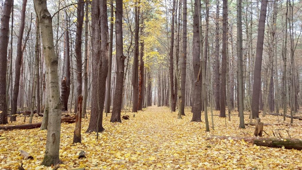 Saratoga Spa State Park, Saratoga Springs, New York.