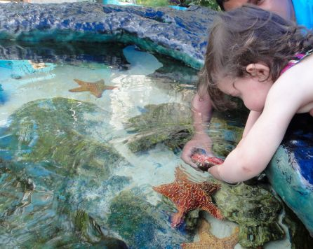 Starfish, Interactive Aquarium, Cancun.